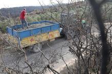 Lleida produirà unes 10.000 tones d'oli, segons la FCAC