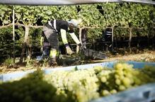 Pomeres 'creades' a Lleida i adaptades al canvi climàtic