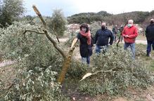 ⏯️ Més de 34.600 hectàrees d'oliveres, malmeses a Lleida per Filomena