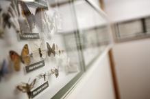 El Museu de les Papallones obre la nova seu després de tancar a Sort