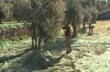El preu de l'oli d'oliva a Itàlia arriba als 6,50 € en origen davant dels 2,62 euros d'Espanya