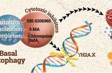 El fàrmac SAR405, millor inhibidor de l'autofàgia