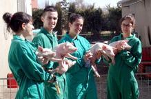 Grup de veterinaris amb porquets. Arxiu