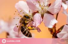 Les abelles, més enllà de la mel
