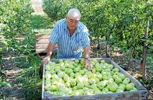 Una finca de fruita de Lleida