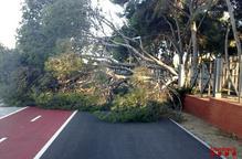 Vint incidents per les fortes ratxes de vent