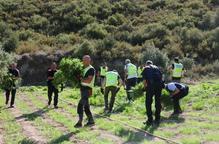 """⏯️ Els Mossos alerten d'un augment """"exponencial"""" de plantacions de marihuana a Ponent"""