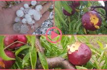 ⏯️ Una pedregada causa greus danys a les collites de fruita del Segrià