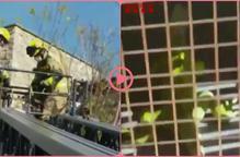 ⏯️ Rescaten una iguana que s'havia enfilat a un arbre a Lleida