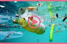 Cuidem els oceans