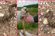 ⏯️ Els Agents Rurals rescaten una serp atrapada a Arbeca