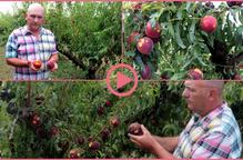 La fruita de pinyol del Baix Segrià, afectada per la pedregada d'aquest dimarts