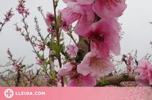 Preview floració arbres