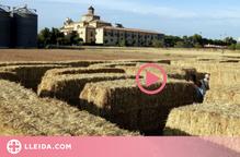 ⏯️ Un laberint fet amb més de 300 bales de palla promou el turisme a la Segarra
