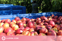 UP preveu una millora del preu en origen de la fruita de pinyol aquesta campanya