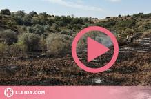 Vista aèria de l'incendi que va quemar 55 hectàrees de vegetació entre Catalunya i Aragó