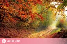 Per què canvien de color les fulles dels arbres a la tardor?