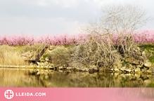 Floració primaveral