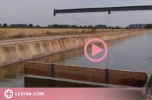 ⏯️ Més protecció al canal d'Urgell per evitar que s'hi ofeguin animals salvatges