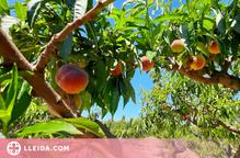 Un centenar d'estudiants de Lleida celebraran l'any de les fruites i verdures amb Afrucat