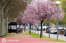 Lleida planta prop d'un miler de nous arbres a la ciutat durant aquest any