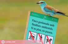 Les mesures de gestió milloren la conservació de les aus estepàries de Lleida