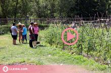⏯️ Un poble del Pallars Jussà converteix terrenys en desús en horts comunitaris i jardins comestibles