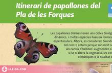 La Seu d'Urgell crea un itinerari de papallones al Pla de les Forques