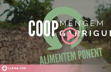 ⏯️ Quinze productores de Ponent es constitueixen com a cooperativa
