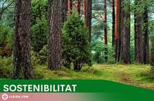 Vielha e Mijaran subhasta més de 1700 metres cúbics de biomassa forestal