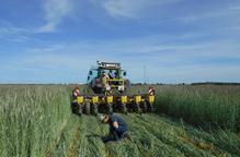 La UdL, en un projecte per augmentar l'autosuficiència europea de proteïna vegetal