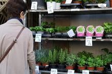 """El sector de les flors: """"El virus ens ha robat la primavera"""""""