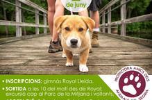 El gimnàs Royal organitza una caminada amb peluts i solidària