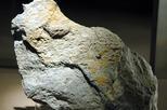 'Paleontologia de les terres de Lleida'