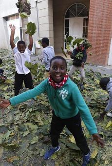 Més personal per netejar les fulles a Alcarràs i evitar caigudes