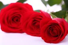 Per Sant Jordi, amanida de Roses