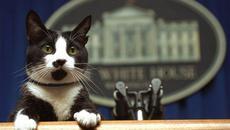 Socks, el gato del ex presidente Bill Clinton fallecido el 20 de febrero del 2009