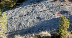 Petjades de dinosaure a Coll de Nargó