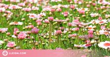Entra al món de les flors aquest estiu