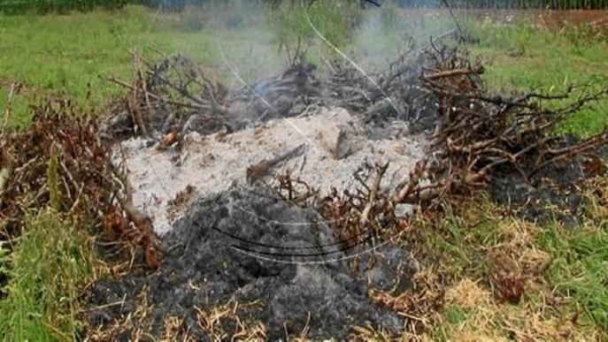 Agricultura tem que es descontroli el 'foc bacterià' després de 2 nous focus a la Noguera