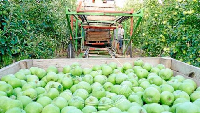 La UE podria deixar sense ajudes el 30% del sector de fruita de Lleida que avui en cobra