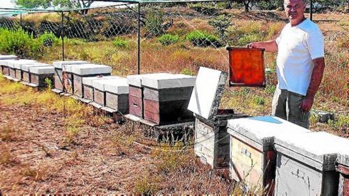 Els apicultors de Lleida preveuen una gran producció de mel d'alta qualitat