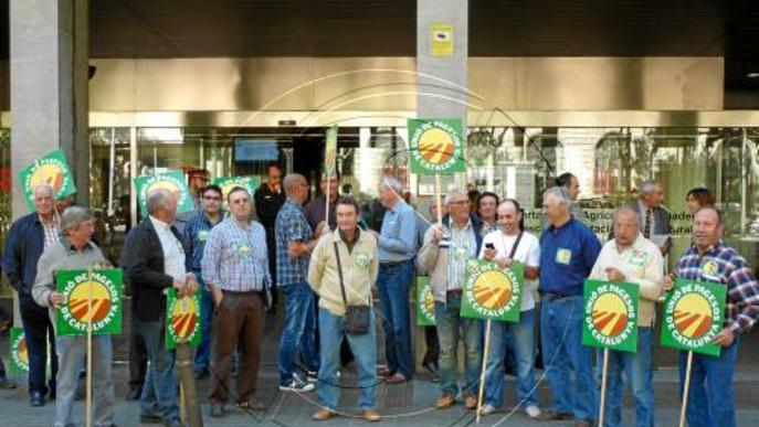 La producció d'ametlla augmenta un 55% a Lleida