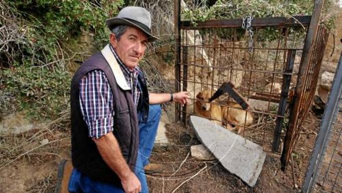 Cacen a Aitona tres dels sis gossos salvatges que van matar més de 200 ovelles de Seròs