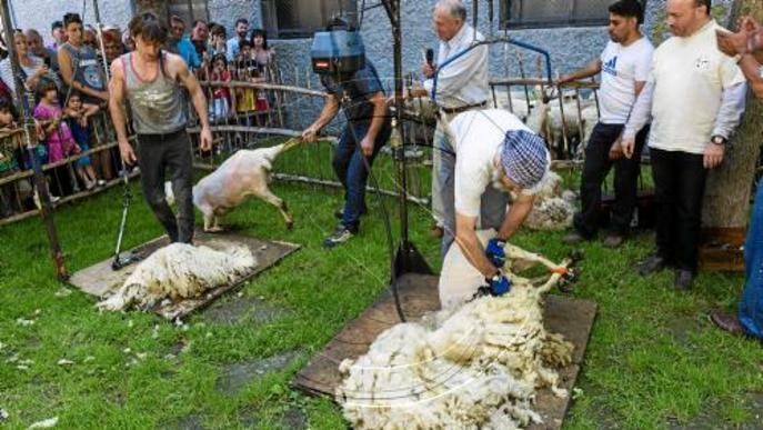 Sort celebra el seu Sant Joan particular amb la tradicional xolla d'ovelles