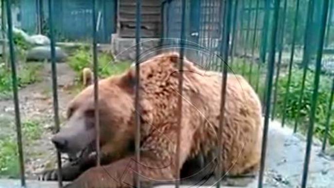 Donen un mes a Arties per millorar les condicions de vida dels dos óssos