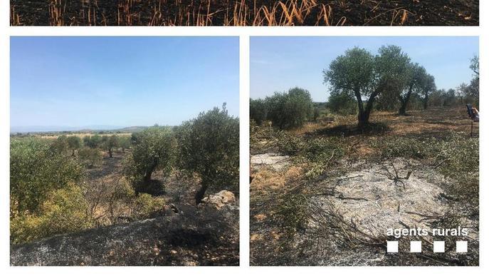 Dos focs a les Garrigues per cremes agrícoles mal apagades