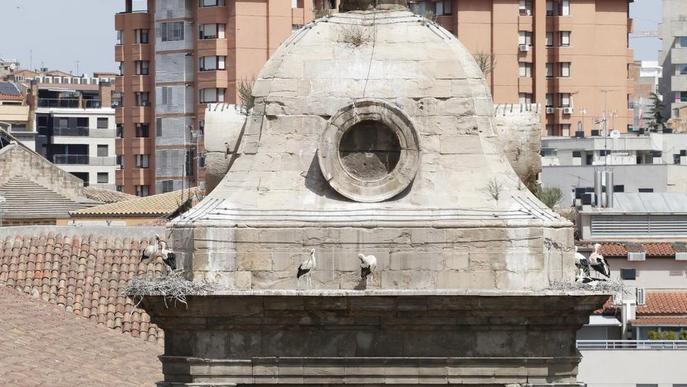 Ipcena insta el Govern a vetar la retirada de nius de la Catedral