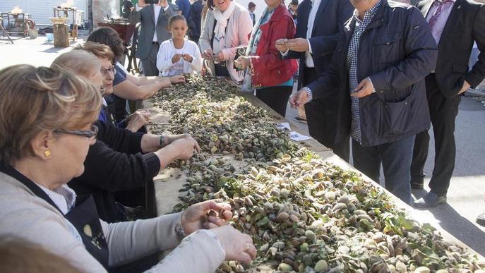 Augmenten les plantacions d'ametllers a Vilagrassa per l'alta producció en regadiu