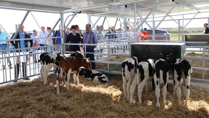 La cooperativa d'Ivars presenta un nou projecte de certificació de boví